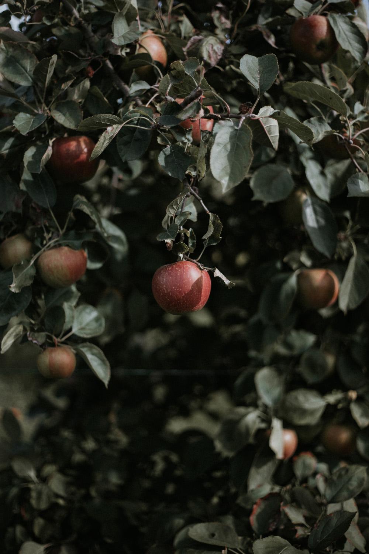 louseni-jumieges-dinettemagazine-cueillette-pommes